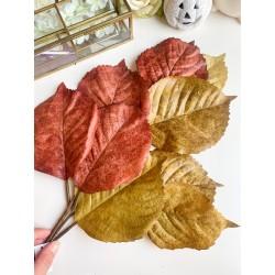 Ramo di foglie autunnali...